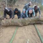 Sangmu Sherpa pushing wood